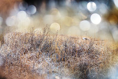 Frozen meadow Royalty Free Stock Photography