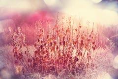 Frozen meadow Stock Images
