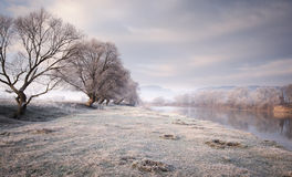 Frozen meadow near lake with trees in late november Royalty Free Stock Images
