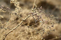 Free Frozen Meadow Plant Stock Photo - 46847510