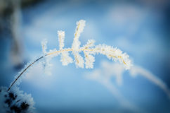 Frozen meadow plant Stock Images