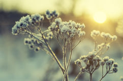 Frozen meadow plant Royalty Free Stock Image