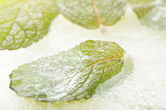 Frozen mint leaf Royalty Free Stock Images