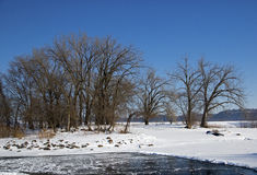 Frozen Mississippi River delta lake. Royalty Free Stock Photo