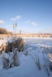 Frozen Mississippi River wetlands. Wetlands area in the Mississippi River basin near Minneapolis Royalty Free Stock Image