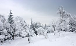 Frozen Misty Forest in Winter Landscape Stock Photos