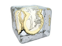 Frozen Money In Ice Cube Royalty Free Stock Image