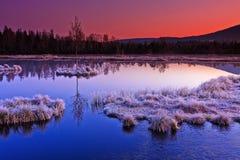Frozen moor dawn Stock Images