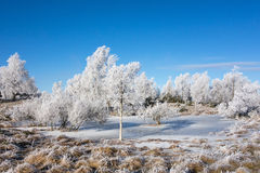 Frozen moor Royalty Free Stock Photography