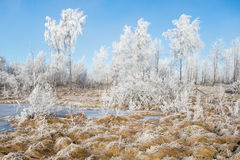 Frozen moor Stock Photos