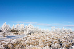 Frozen moor Royalty Free Stock Photo