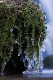 Frozen moss Royalty Free Stock Photography