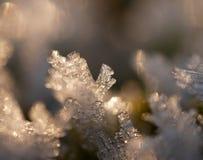 Frozen moss Stock Photos
