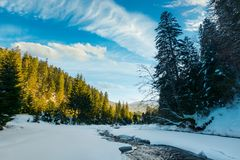 frozen mountain river among the forest in winter. stock photos