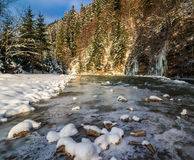 Frozen mountain river in spruce forest. Landscape with spruce forest near the frozen mountain river in evening light Royalty Free Stock Photo