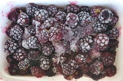 Frozen mulberry. Ice cold berries in white plastic box with frost Stock Photo