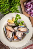 Frozen mussels. Stock Photography