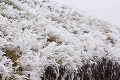 Frozen nature stock photo