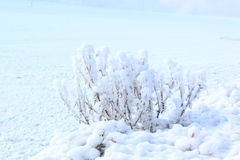 Frozen nature. Frozen white plants in a cold winter day Stock Photo