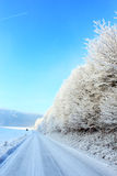 Frozen nature. Frozen white plants in a cold winter day in europe Royalty Free Stock Images