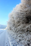 Frozen nature. Frozen white plants in a cold winter day Stock Photos