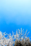 Frozen nature. Frozen white plants in a cold winter day Royalty Free Stock Images
