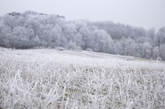 Frozen nature with frozen grass on a meadow winter. Frozen nature on a frozen meadow with frozen grass in winter Stock Photos