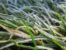 Frozen nature. Winter picture with frozen grass Stock Images