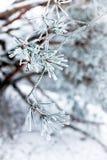 Frozen needles Royalty Free Stock Photography