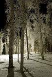 FROZEN: night park. Night in a frozen park Royalty Free Stock Photo