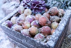 Frozen onions in a wooden crate in winter time. Frozen onions in a wooden crate sprinkled with snow in winter Stock Image