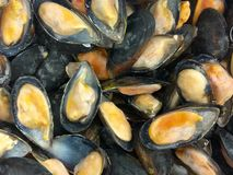 Frozen opened mussels in the shells with ice. Uncooked seafood background. Frozen opened mussels in the shells with ice. Uncooked seafood close up background stock photography