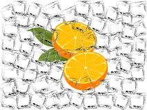 Frozen oranges Stock Photos