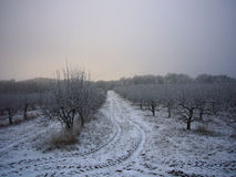 Frozen orchard Stock Photography