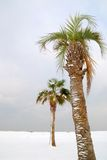 Frozen palm tree Stock Photo