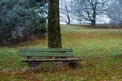 Frozen park. Frosty morning in the park - winter has arrived Royalty Free Stock Images