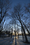 Frozen park reflecting winter shadows at sunset royalty free stock image