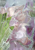 Frozen pastel pink flowers 2 Stock Photography