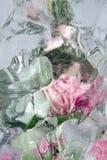Frozen pastel pink flowers Stock Image