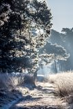 Frozen path lit by the morning sun Stock Image
