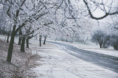 Frozen path and trees Royalty Free Stock Image