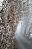 A Frozen Pathway Stock Image