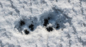 Frozen paw marks Stock Photography