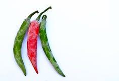 Frozen pepper plantation Stock Image