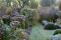 Frozen plants in early morning garden. Frozen perennials grasses and shrubs in early morning garden stock images