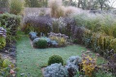 Frozen plants in morning garden. Frozen perennials grasses and shrubs in morning garden Stock Photography