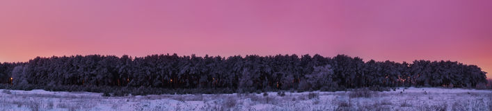 Frozen pine forest after sunset panorama stock images