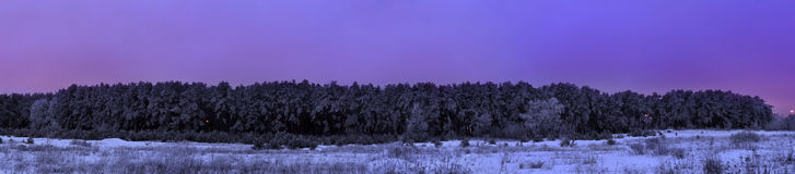 Frozen pine forest after sunset panorama blue royalty free stock photography