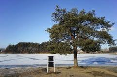 Frozen pine Stock Photos
