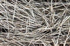 Frozen pine needles background, grass in hoarfrost Stock Photos
